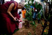 Его Святейшество Далай-лама сажает саженец в парке Бодайдзю (дерева Бодхи). Окинава, Япония. 11 ноября 2012 г. Фото: Office of Tibet Japan