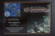 Новый вид морского животного, названный в честь Его Святейшества Далай-ламы: Sirsoe dalailamai. Ирвайн, штат Калифорния, США. 6 июля 2015 г. Фото: Тензин Чойджор (офис ЕСДЛ)